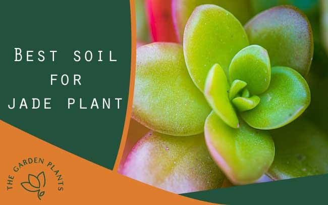 The besto soil for jade plant