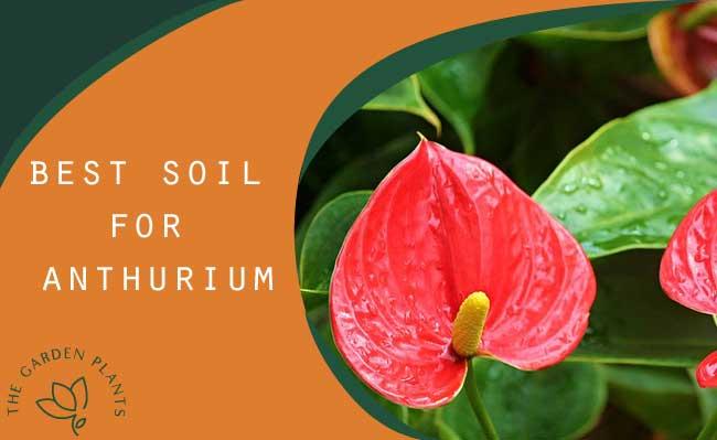 Best soil for anthurium